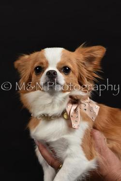 M&N Photography -DSC_2748