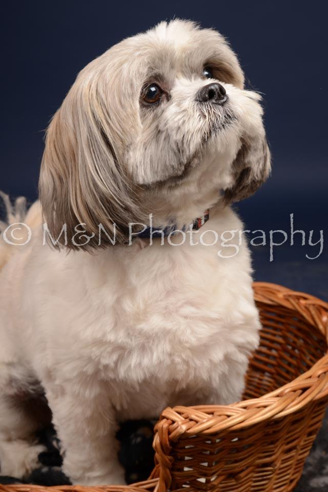 M&N Photography -DSC_0726