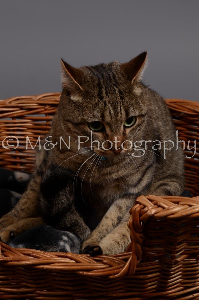 M&N Photography -DSC_2948