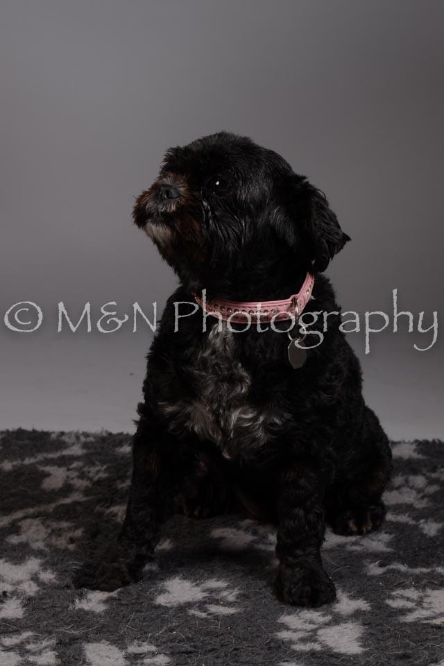 M&N Photography -DSC_2327