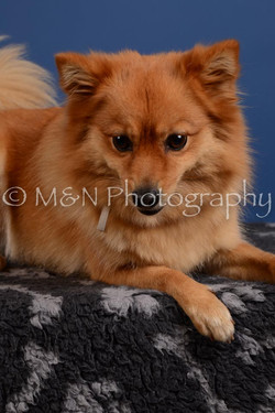 M&N Photography -DSC_5378