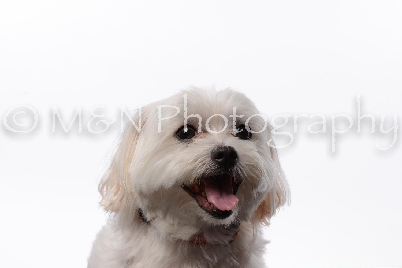 M&N Photography -DSC_8702