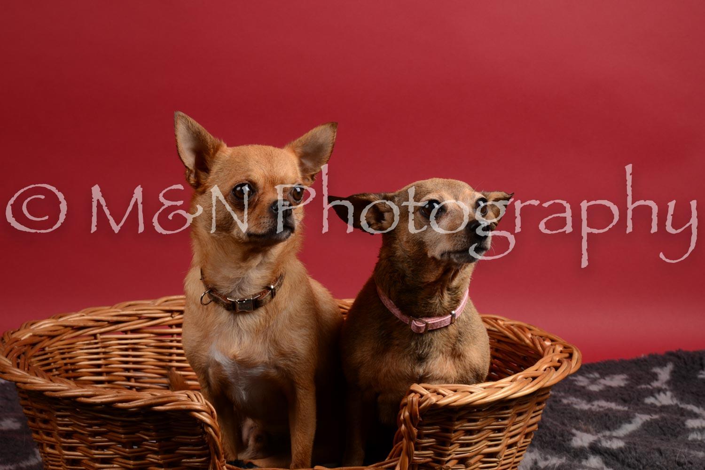 M&N Photography -DSC_8675