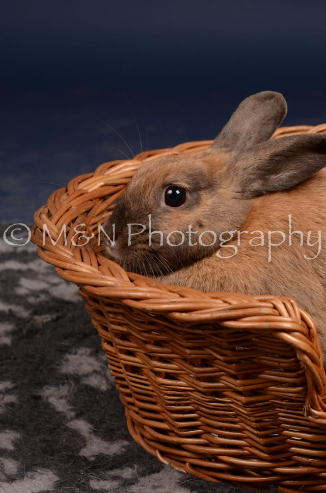 M&N Photography -DSC_0763