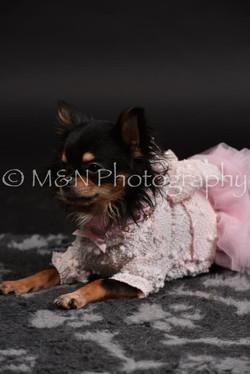 M&N Photography -DSC_2506