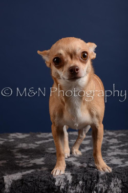 M&N Photography -DSC_4108