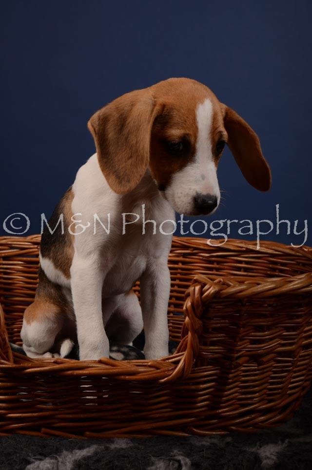 M&N Photography -DSC_4168