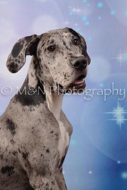 M&N Photography -DSC_6834