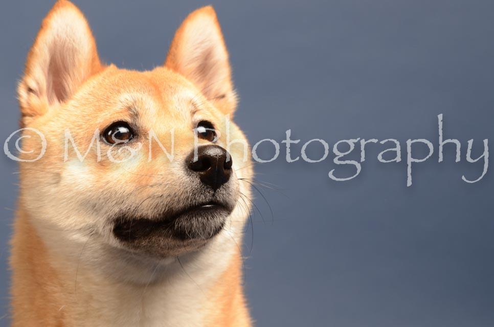 M&N Photography -DSC_4325