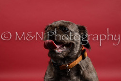 M&N Photography -DSC_8497