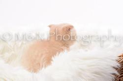 M&N Photography -DSC_8829
