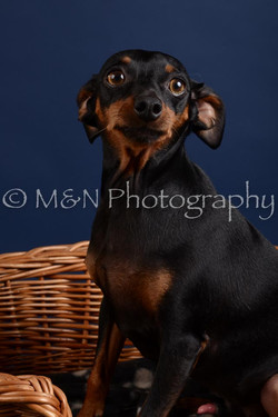 M&N Photography -DSC_3813