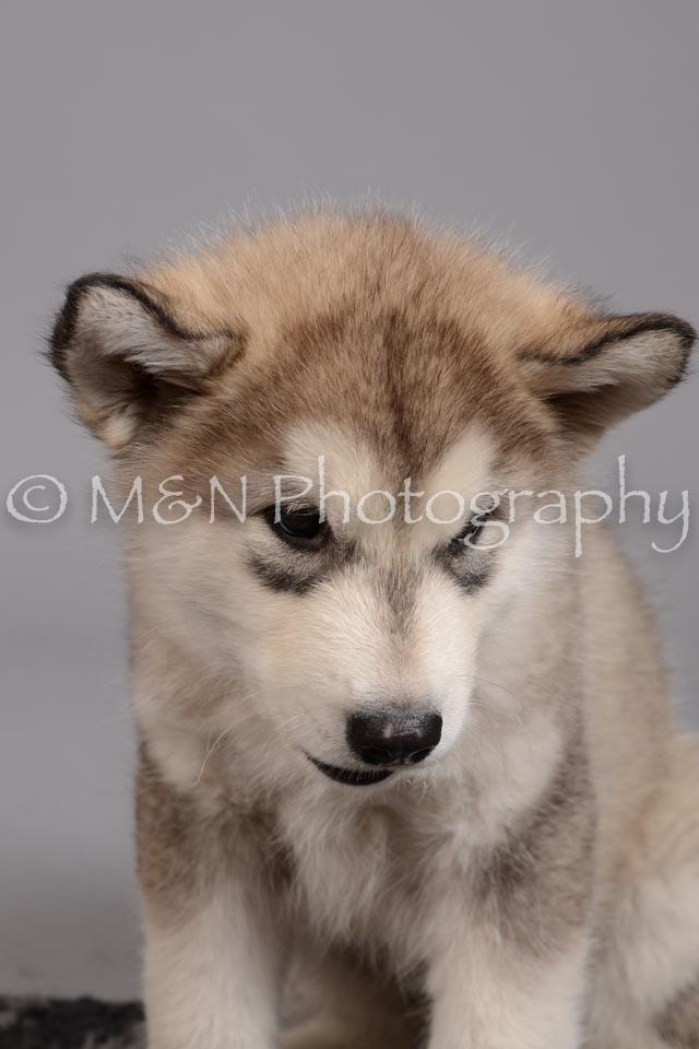 M&N Photography -DSC_2617