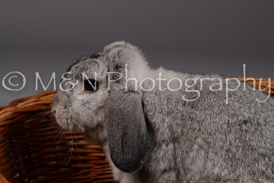 M&N Photography -DSC_2280