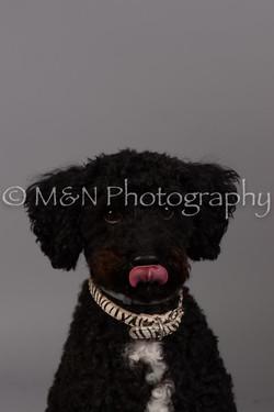 M&N Photography -DSC_2409