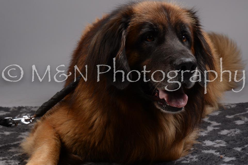M&N Photography -DSC_2662