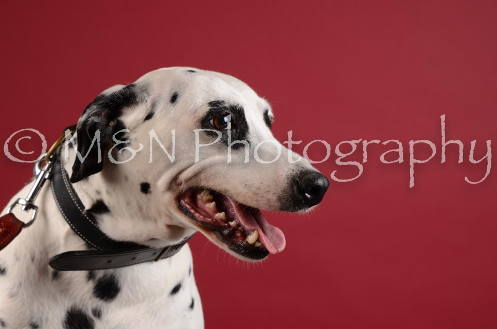 M&N Photography -DSC_3110