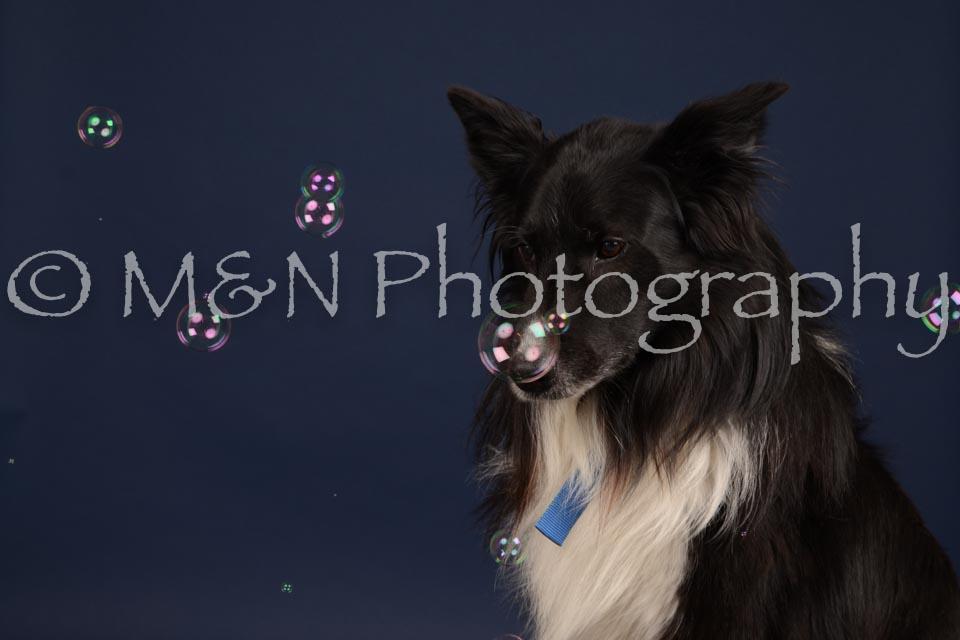 M&N Photography -DSC_0696