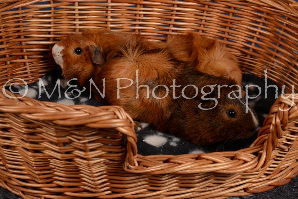 M&N Photography -DSC_5088