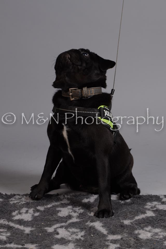M&N Photography -DSC_2542