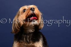 M&N Photography -IMG_4565