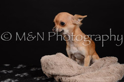 M&N Photography -DSC_5765