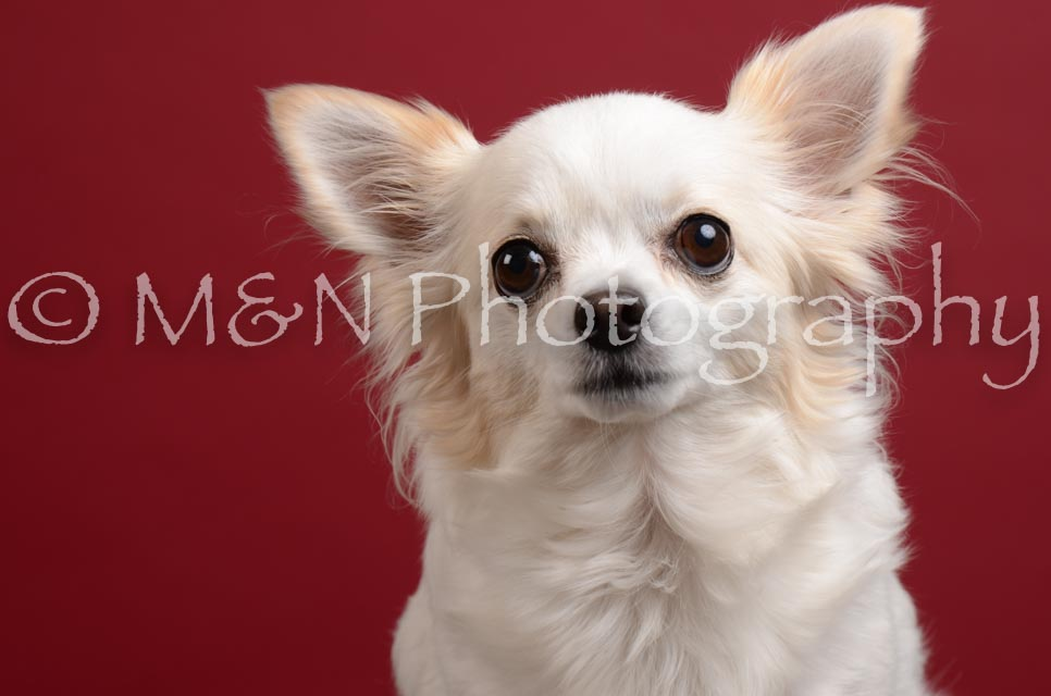 M&N Photography -DSC_3703