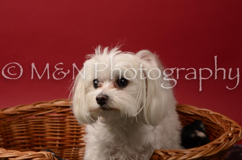 M&N Photography -DSC_6822
