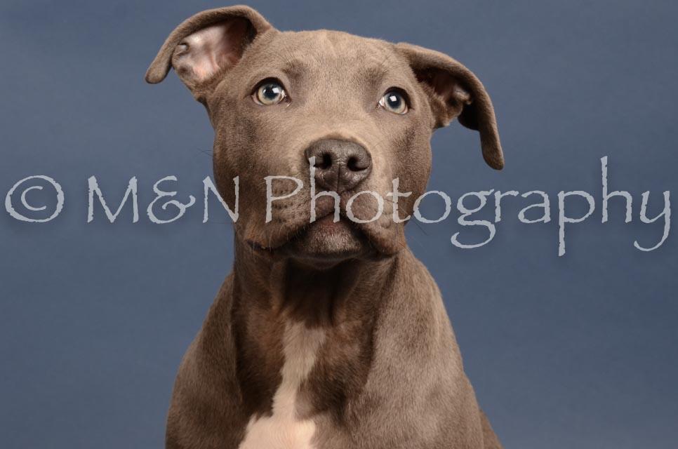 M&N Photography -DSC_4313