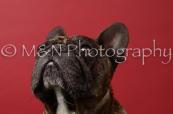 M&N Photography -DSC_6645