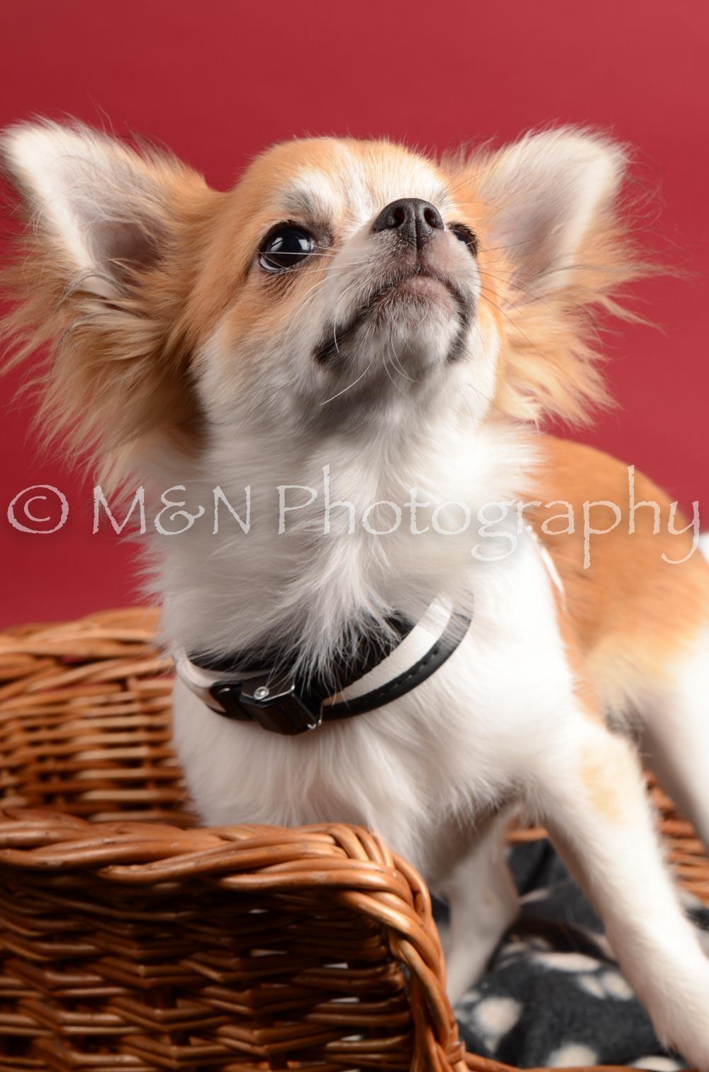 M&N Photography -DSC_8613