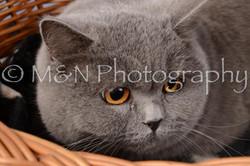 M&N Photography -DSC_6847