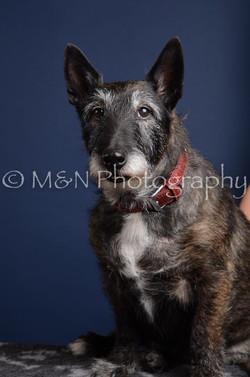 M&N Photography -DSC_3890