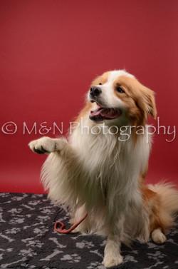 M&N Photography -DSC_6729