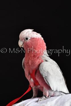 M&N Photography -DSC_2742