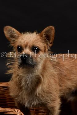 M&N Photography -DSC_2536