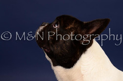 M&N Photography -IMG_4668