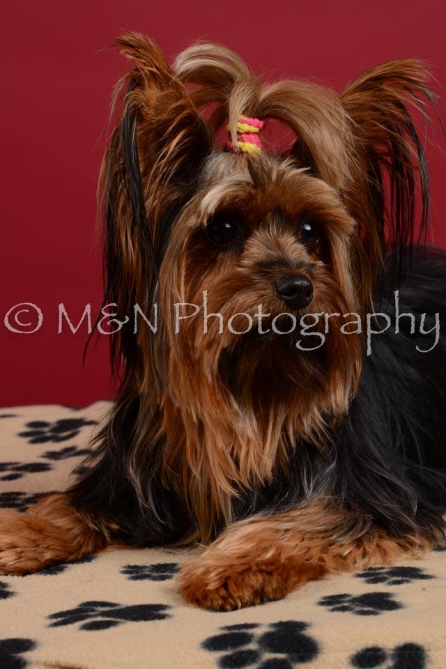M&N Photography -DSC_3555