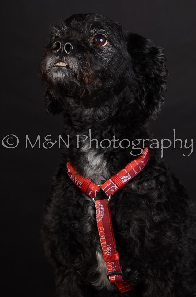 M&N Photography -DSC_5657