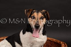 M&N Photography -DSC_0049