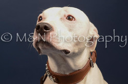 M&N Photography -DSC_4616