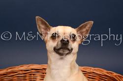 M&N Photography -DSC_4563