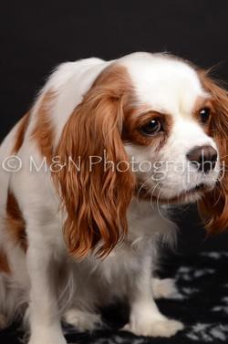 M&N Photography -DSC_5805