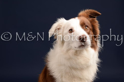 M&N Photography -DSC_0229