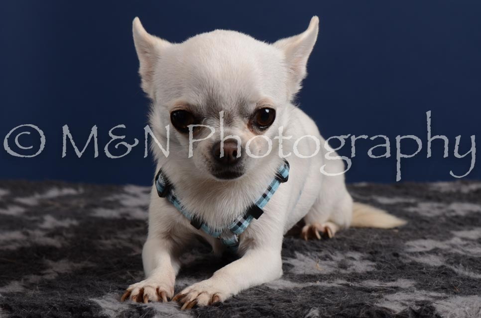 M&N Photography -DSC_3946