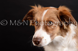 M&N Photography -DSC_5841