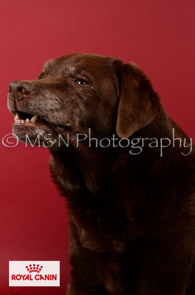 M&N Photography -M&N Photography-DSC_6618