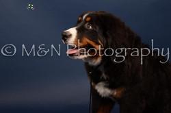 M&N Photography -DSC_3793