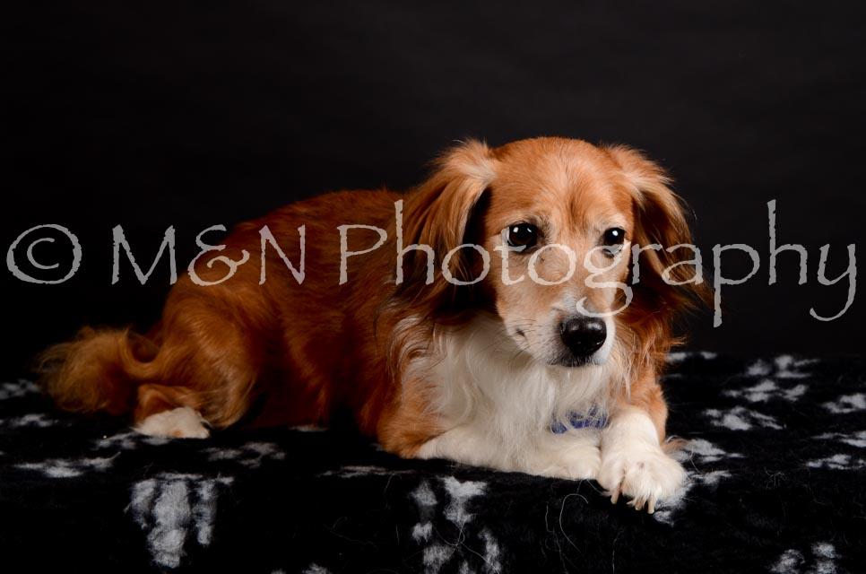M&N Photography -DSC_5452