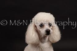 M&N Photography -DSC_9972